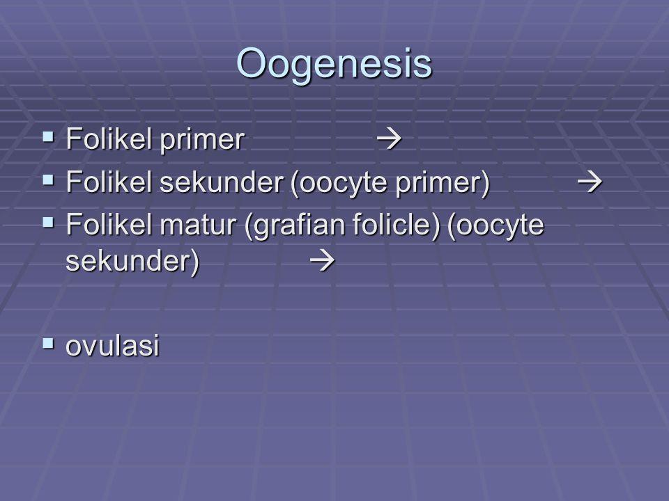 Oogenesis Folikel primer  Folikel sekunder (oocyte primer) 