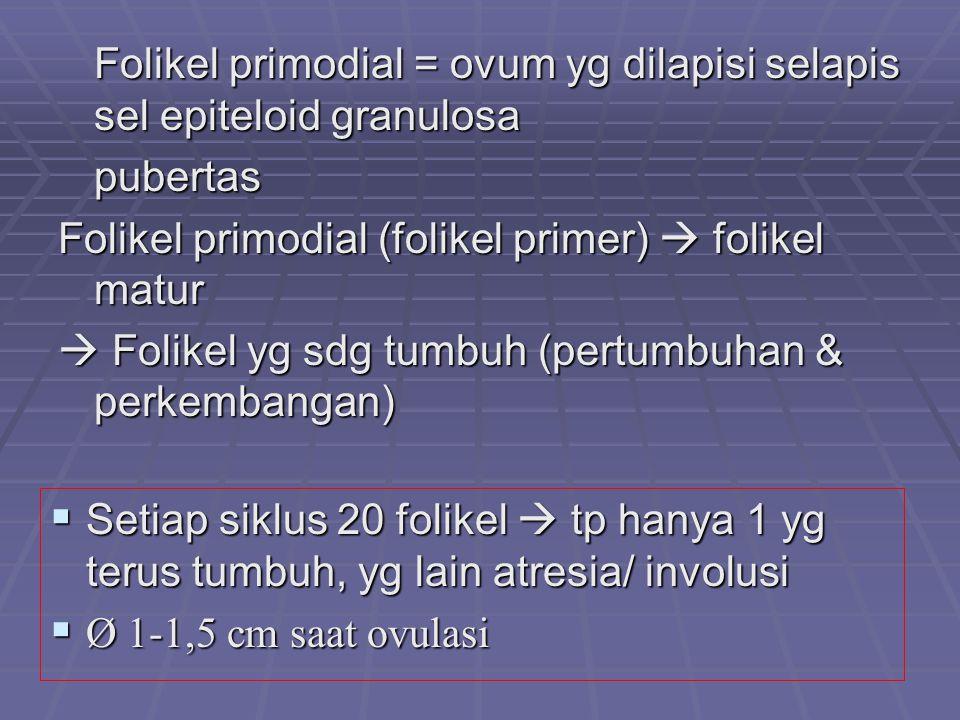 Folikel primodial = ovum yg dilapisi selapis sel epiteloid granulosa