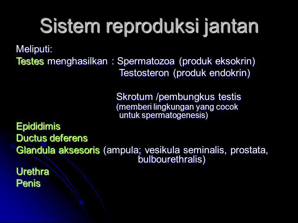Sistem reproduksi jantan