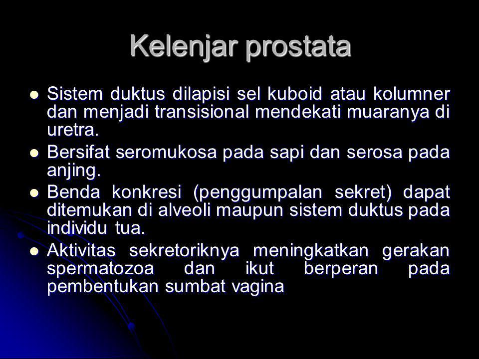 Kelenjar prostata Sistem duktus dilapisi sel kuboid atau kolumner dan menjadi transisional mendekati muaranya di uretra.
