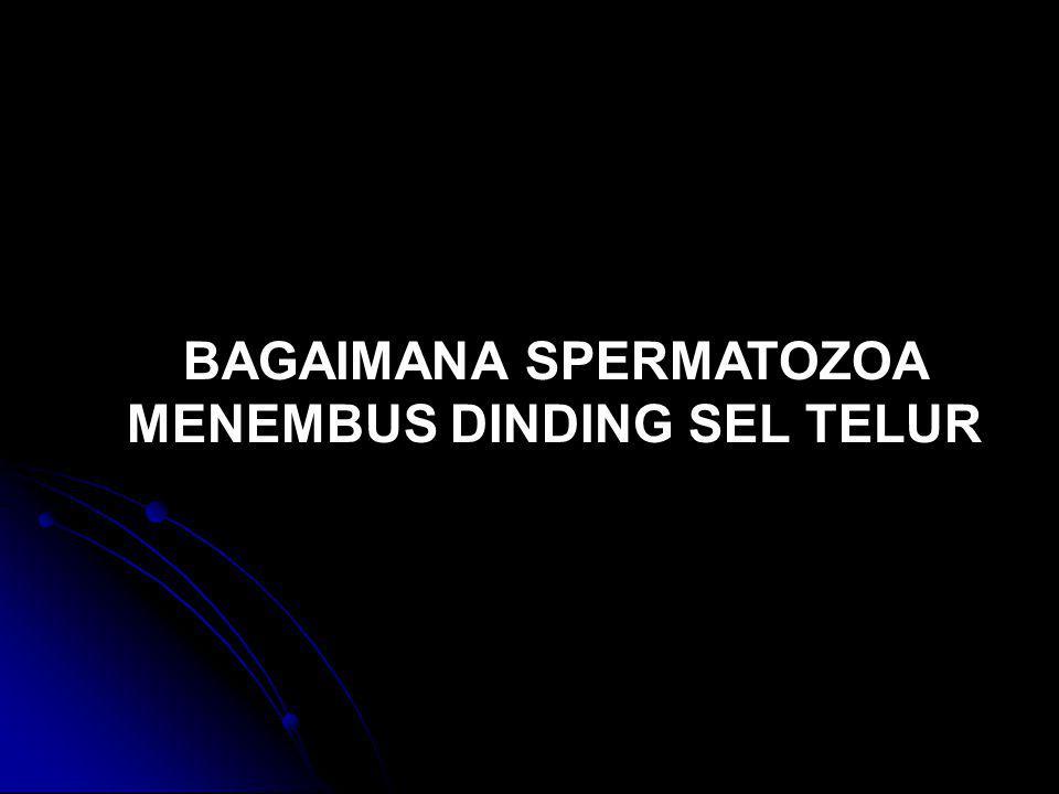 BAGAIMANA SPERMATOZOA MENEMBUS DINDING SEL TELUR