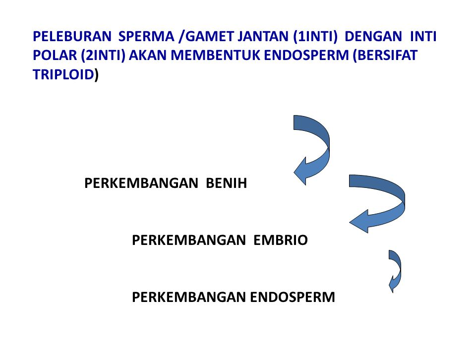 PELEBURAN SPERMA /GAMET JANTAN (1INTI) DENGAN INTI POLAR (2INTI) AKAN MEMBENTUK ENDOSPERM (BERSIFAT TRIPLOID)