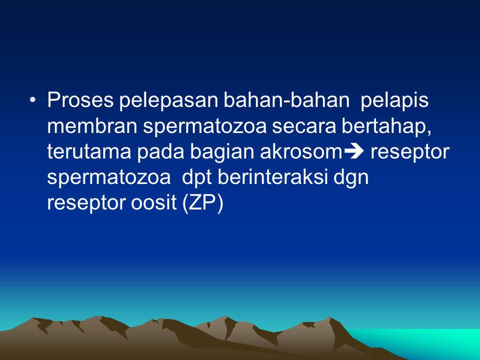 Proses pelepasan bahan-bahan pelapis membran spermatozoa secara bertahap, terutama pada bagian akrosom reseptor spermatozoa dpt berinteraksi dgn reseptor oosit (ZP)