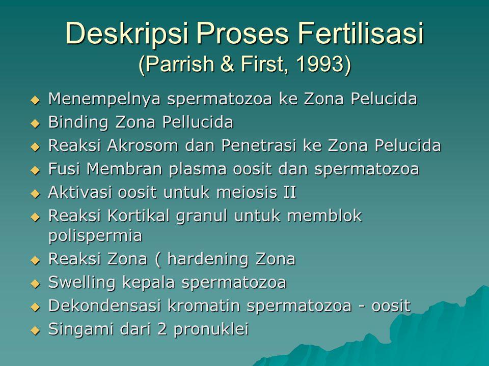 Deskripsi Proses Fertilisasi (Parrish & First, 1993)