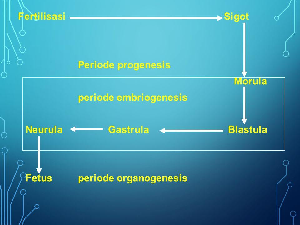 Fertilisasi Sigot Periode progenesis. Morula. periode embriogenesis.