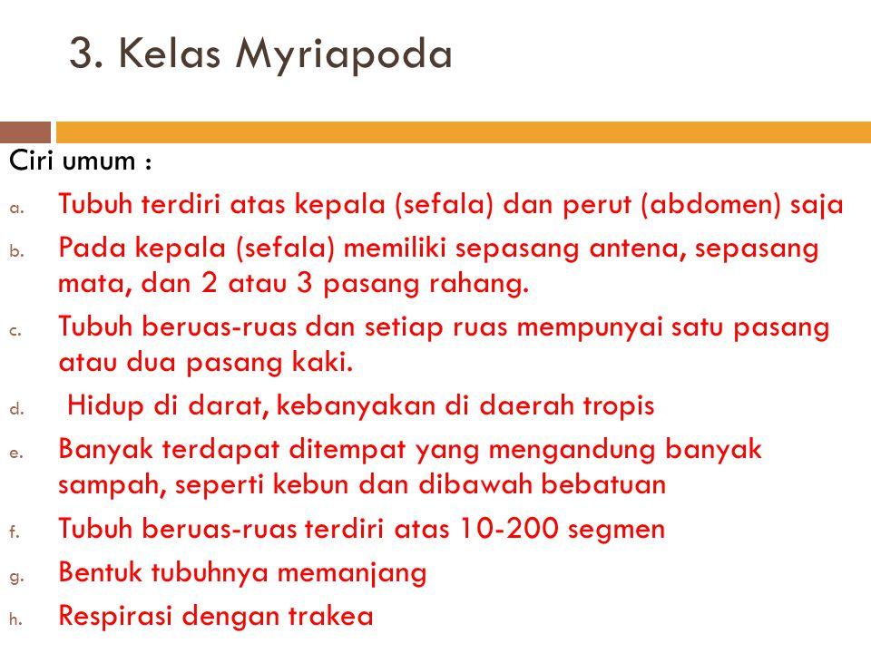 3. Kelas Myriapoda Ciri umum :