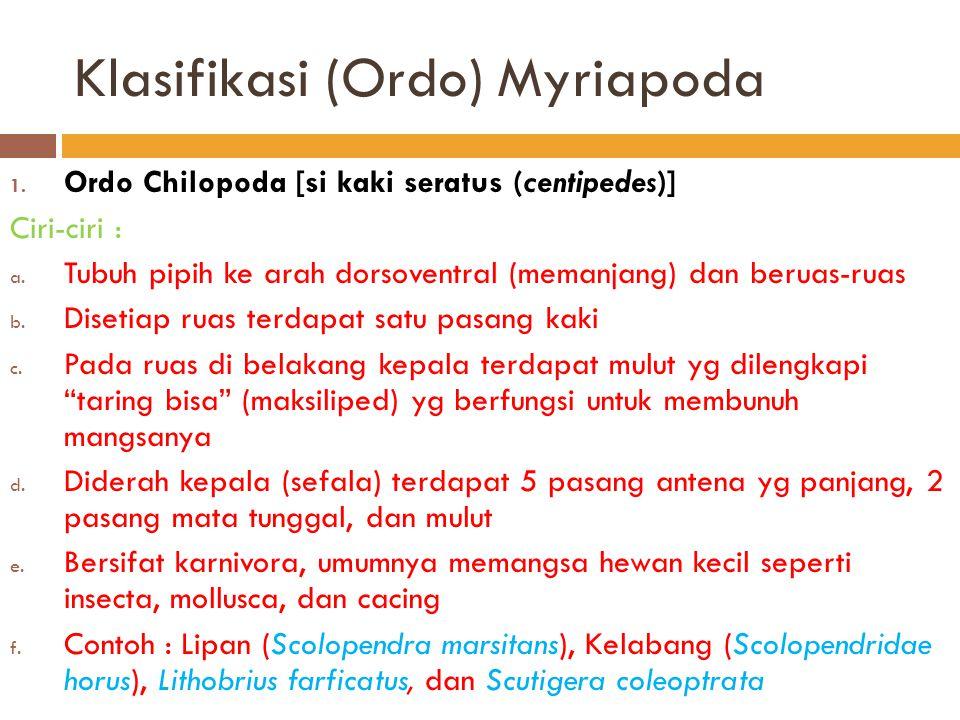 Klasifikasi (Ordo) Myriapoda