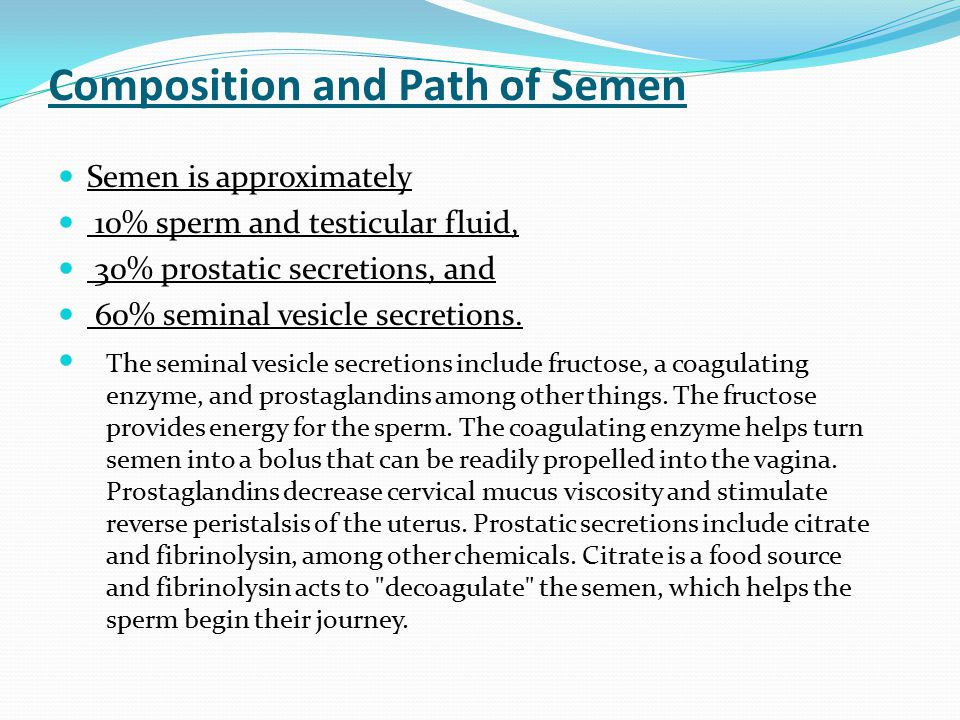 Composition and Path of Semen