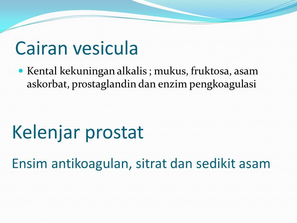 Cairan vesicula Kelenjar prostat