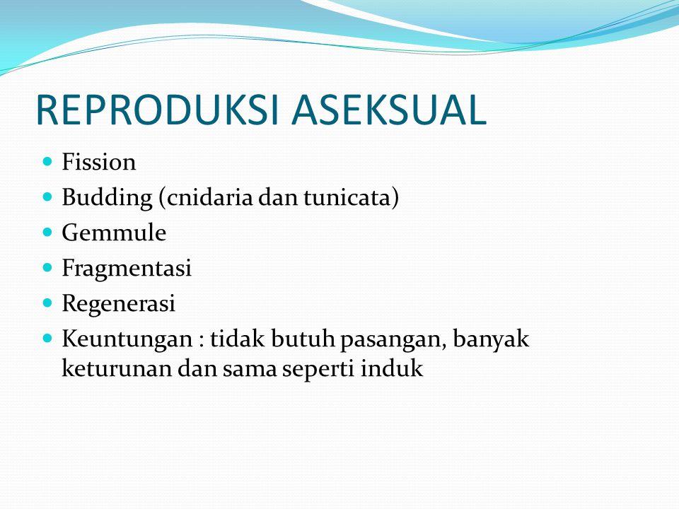 REPRODUKSI ASEKSUAL Fission Budding (cnidaria dan tunicata) Gemmule