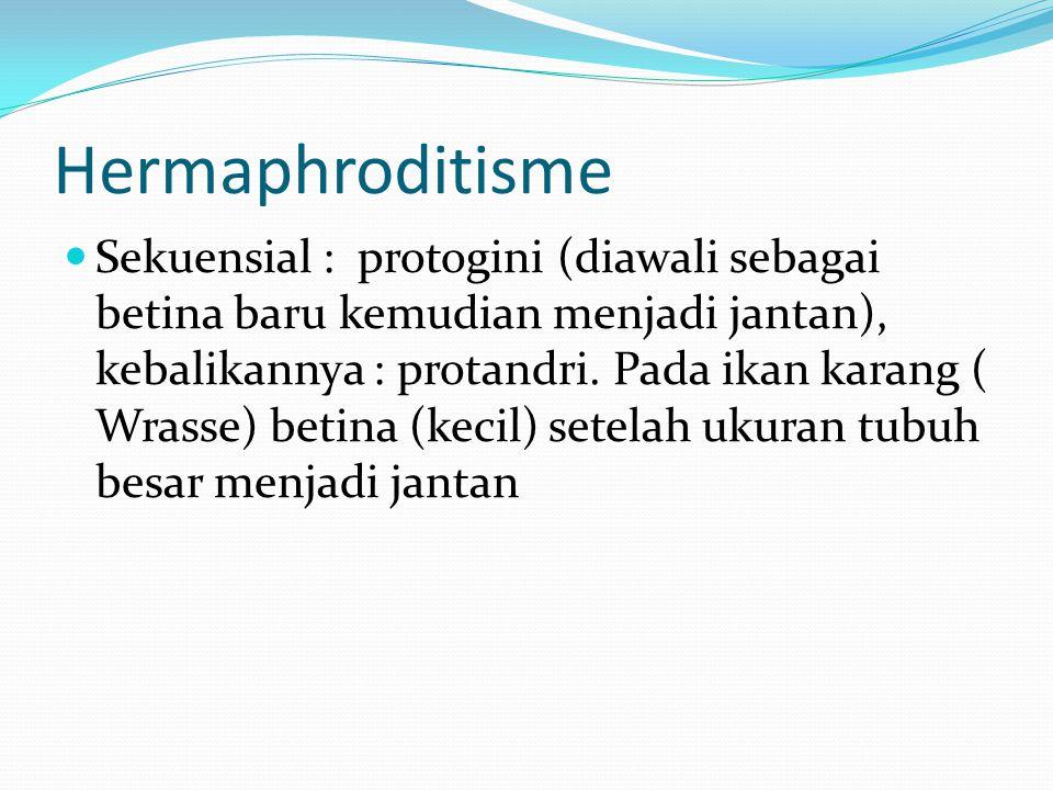 Hermaphroditisme