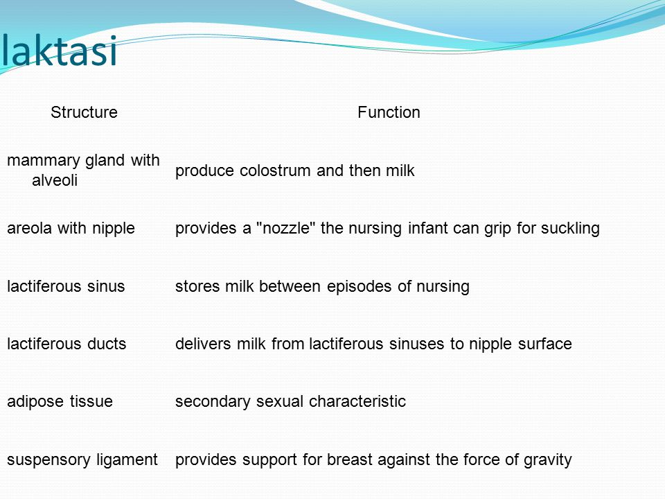 laktasi Structure Function mammary gland with alveoli