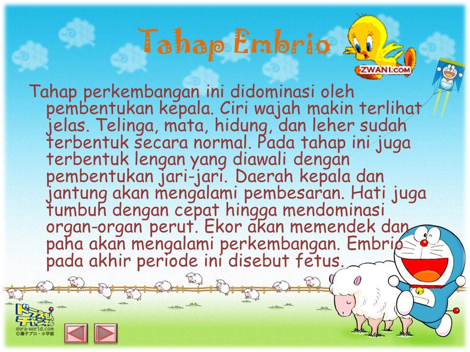 Tahap Embrio