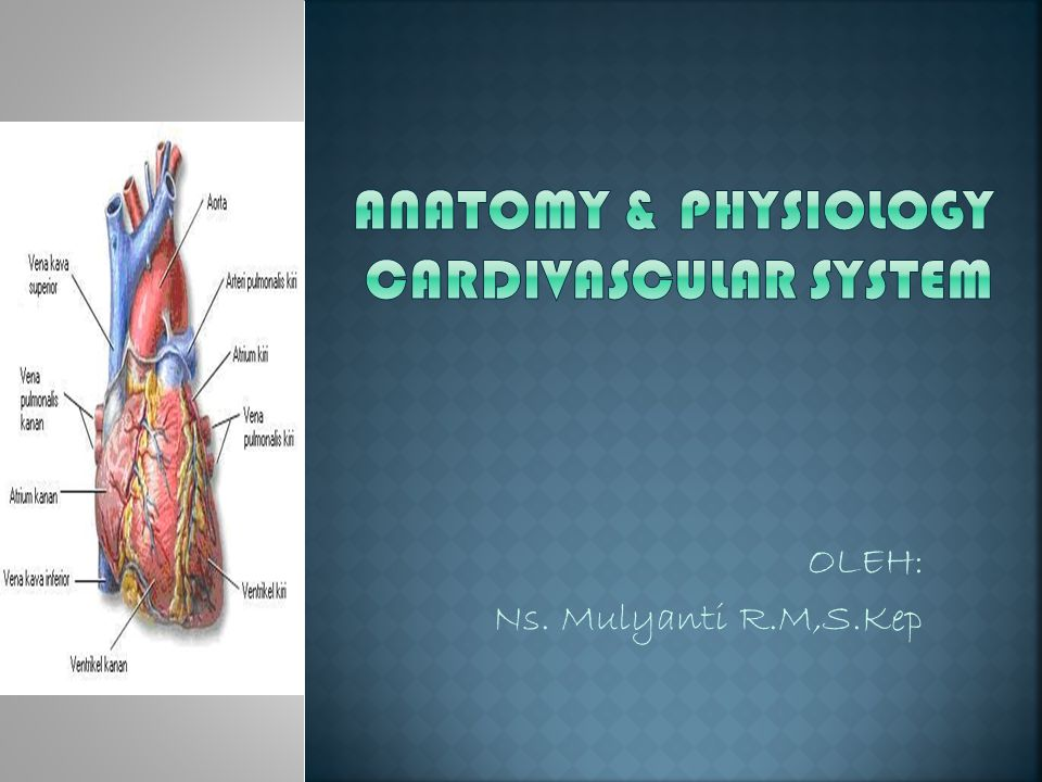 ANATOMY & PHYSIOLOGY CARDIVASCULAR SYSTEM