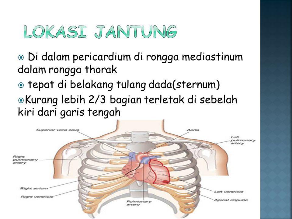LOKASI JANTUNG Di dalam pericardium di rongga mediastinum dalam rongga thorak. tepat di belakang tulang dada(sternum)