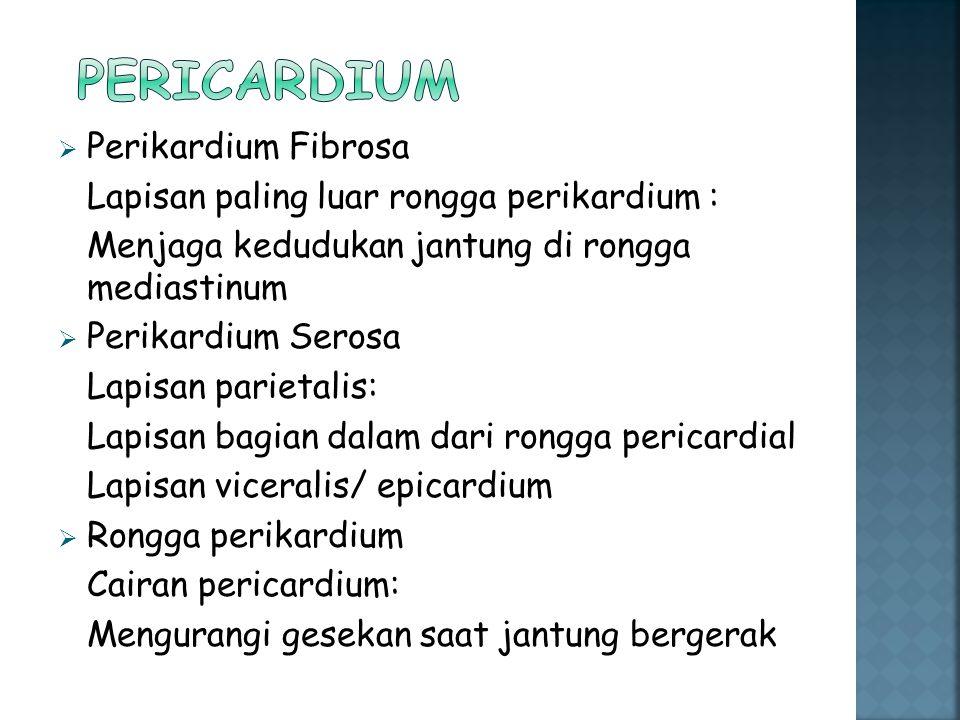 Pericardium Perikardium Fibrosa
