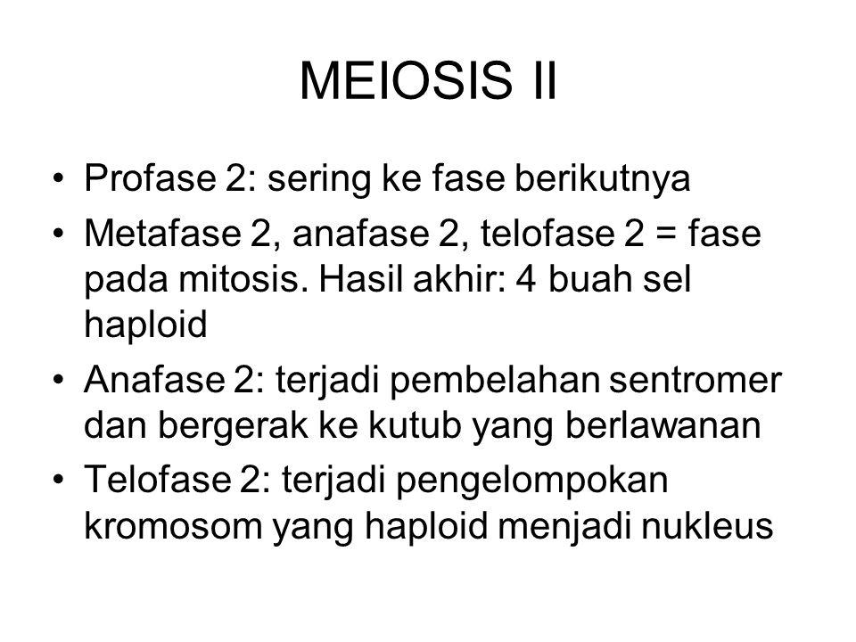 MEIOSIS II Profase 2: sering ke fase berikutnya