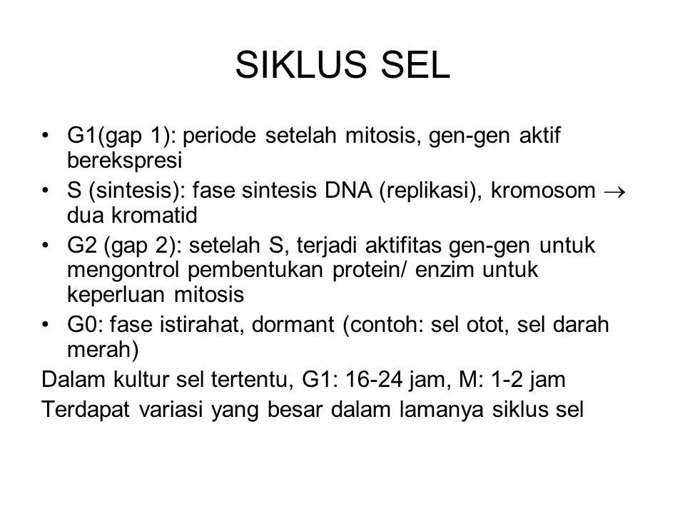 SIKLUS SEL G1(gap 1): periode setelah mitosis, gen-gen aktif berekspresi. S (sintesis): fase sintesis DNA (replikasi), kromosom  dua kromatid.