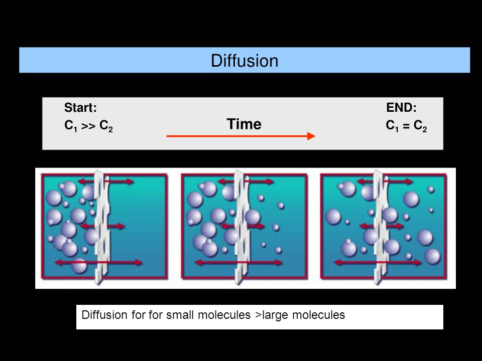 Diffusion for for small molecules >large molecules