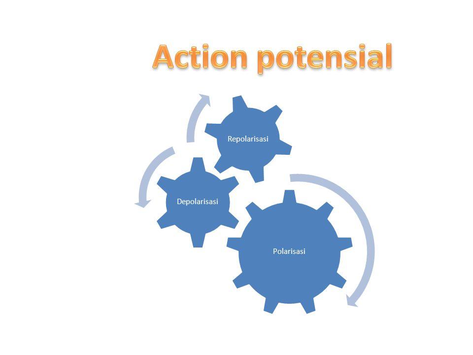 Action potensial Polarisasi Depolarisasi Repolarisasi