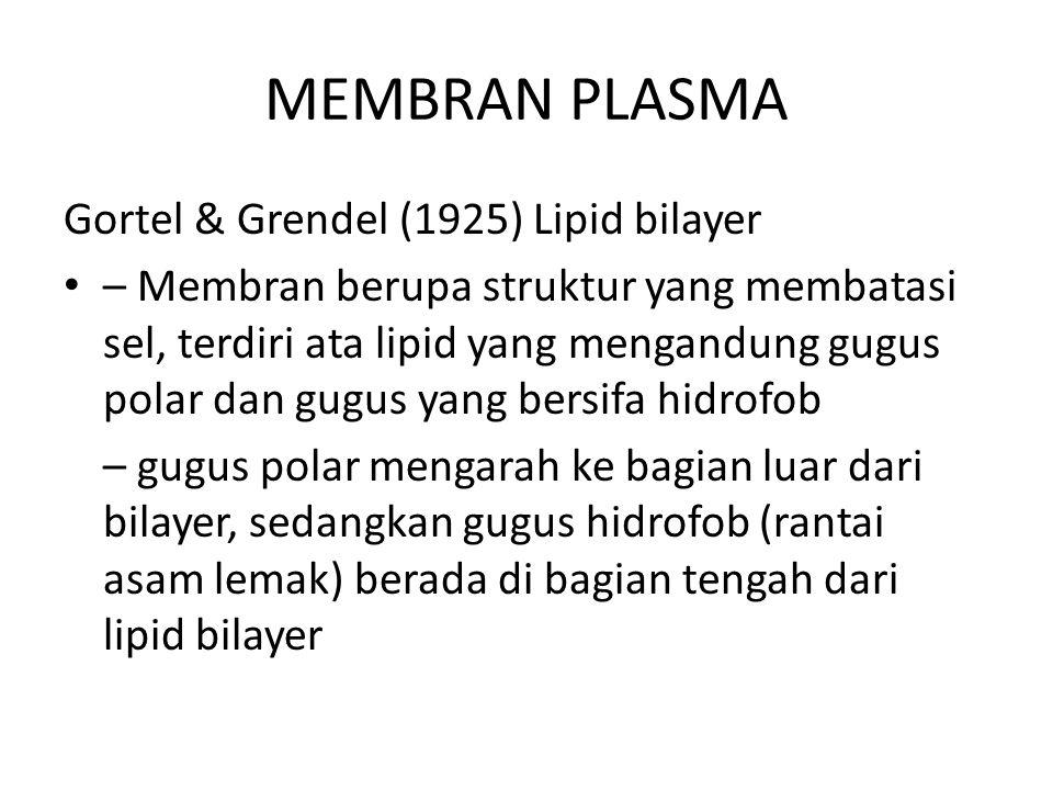 MEMBRAN PLASMA Gortel & Grendel (1925) Lipid bilayer