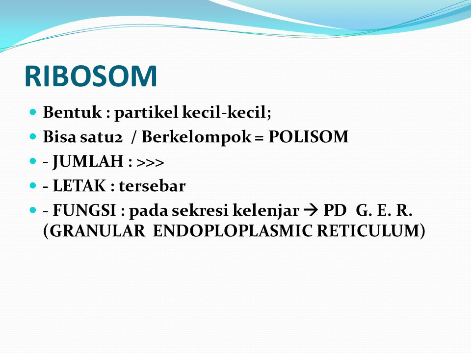 RIBOSOM Bentuk : partikel kecil-kecil;
