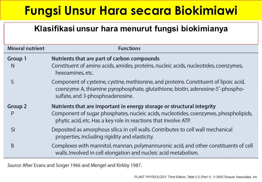 Fungsi Unsur Hara secara Biokimiawi