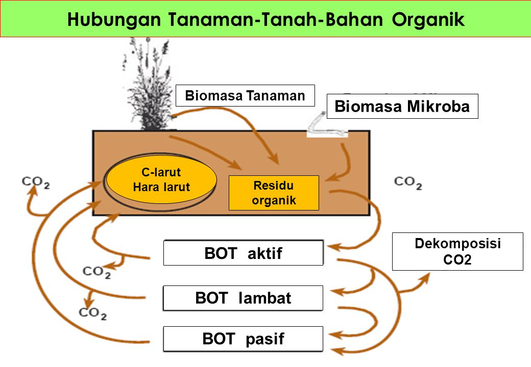 Hubungan Tanaman-Tanah-Bahan Organik