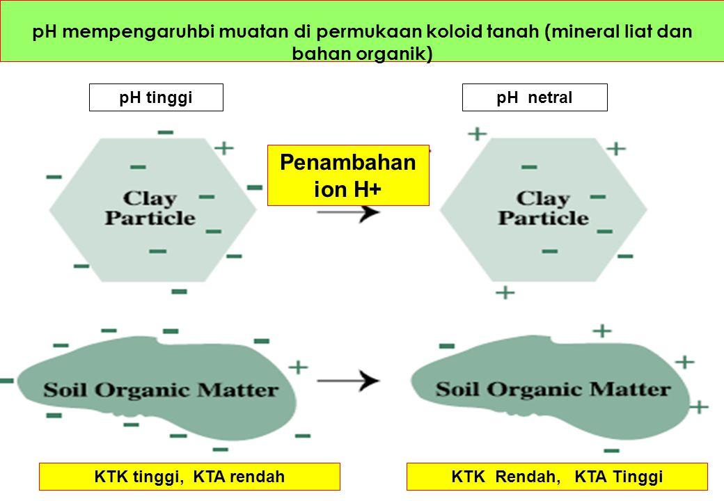 pH mempengaruhbi muatan di permukaan koloid tanah (mineral liat dan bahan organik)