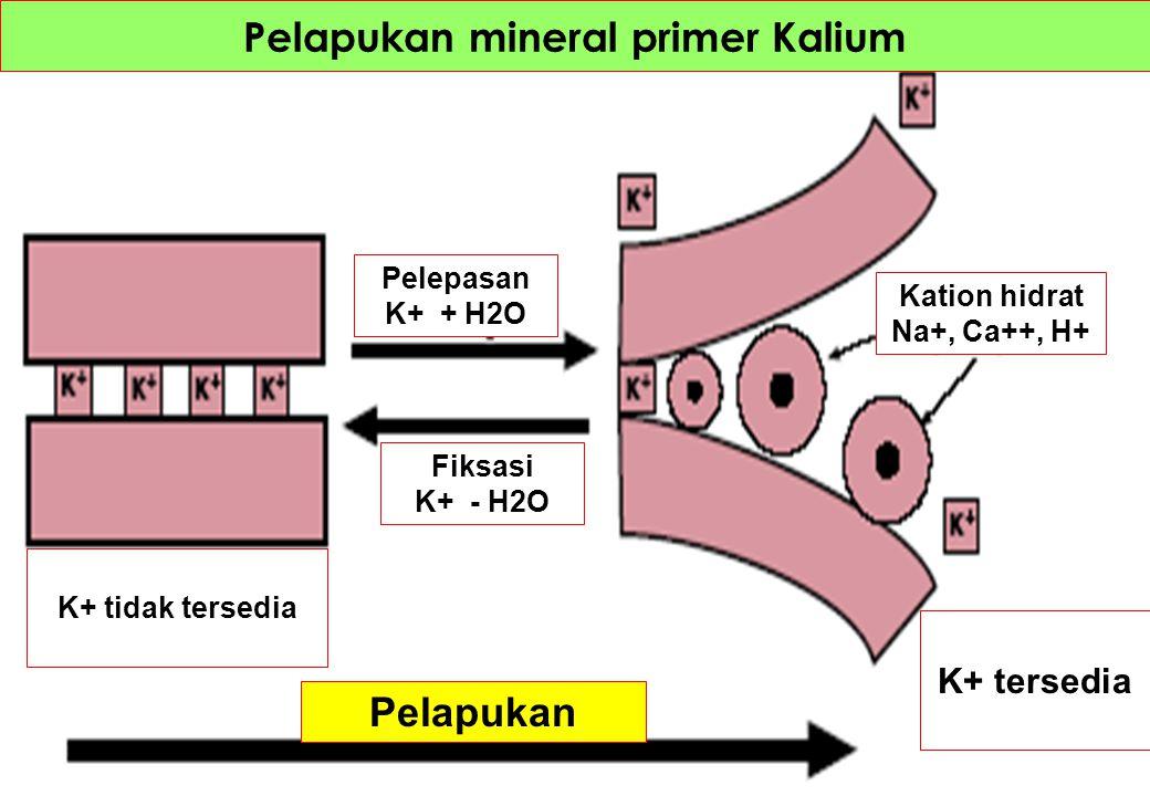 Pelapukan mineral primer Kalium