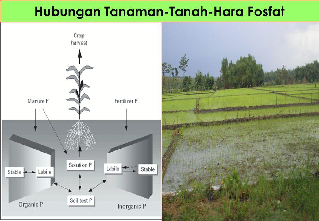 Hubungan Tanaman-Tanah-Hara Fosfat