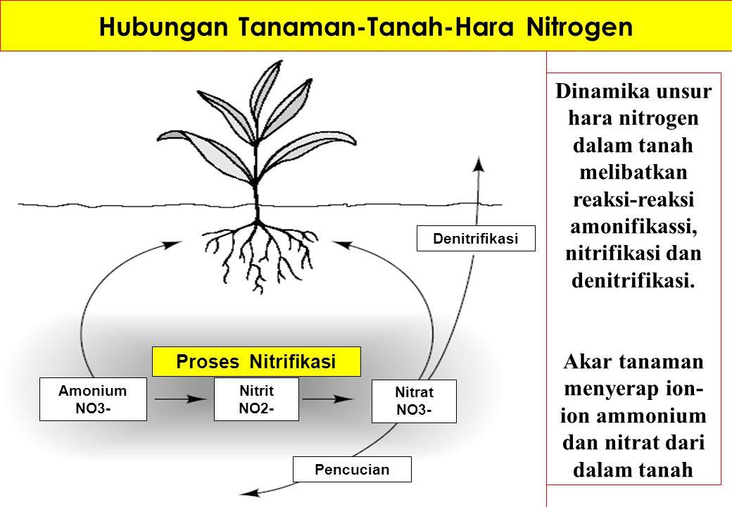Hubungan Tanaman-Tanah-Hara Nitrogen