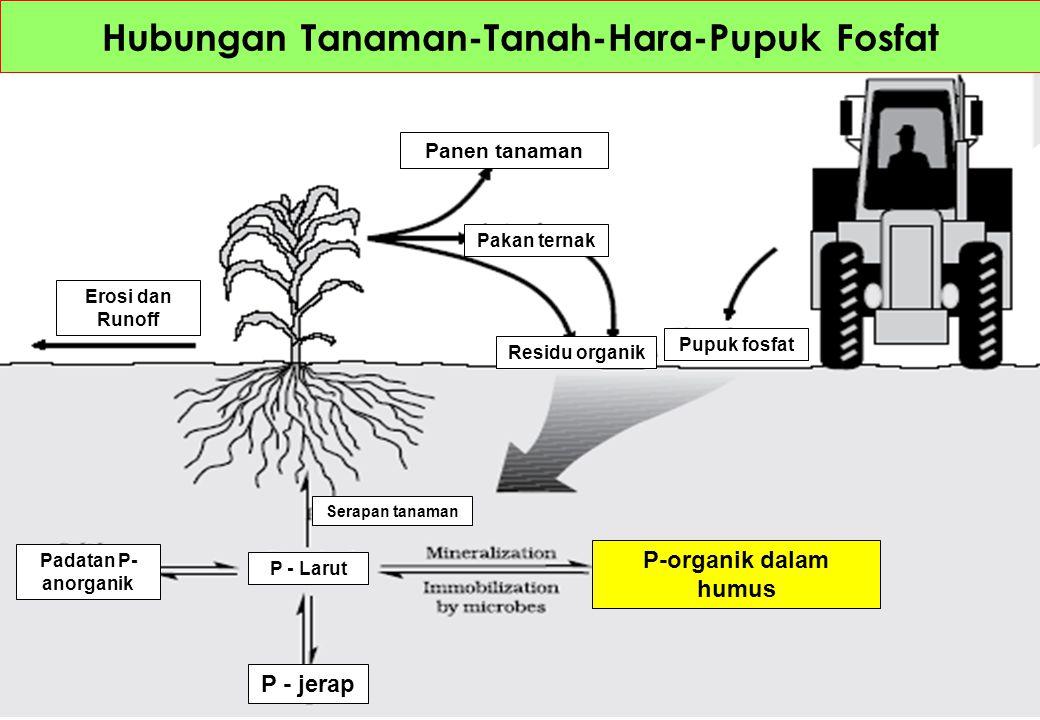 Hubungan Tanaman-Tanah-Hara-Pupuk Fosfat