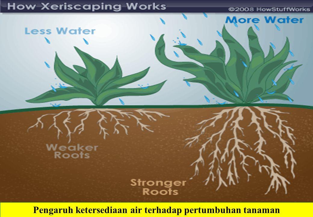 Pengaruh ketersediaan air terhadap pertumbuhan tanaman