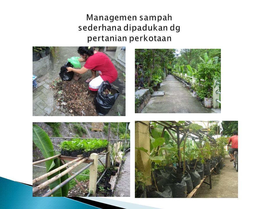 Managemen sampah sederhana dipadukan dg pertanian perkotaan