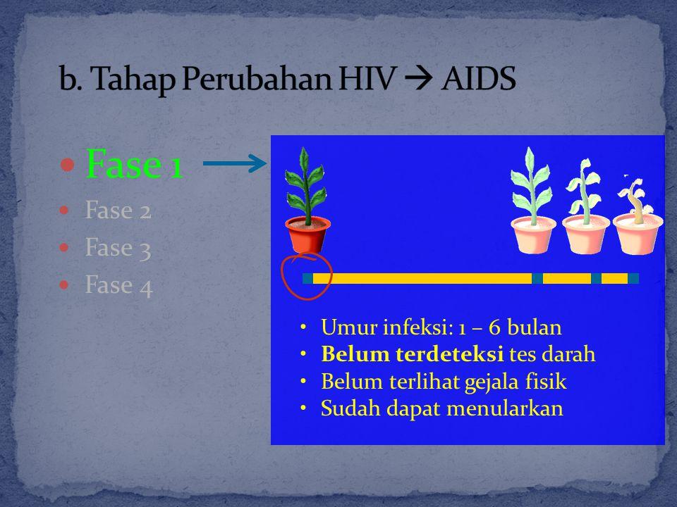 b. Tahap Perubahan HIV  AIDS
