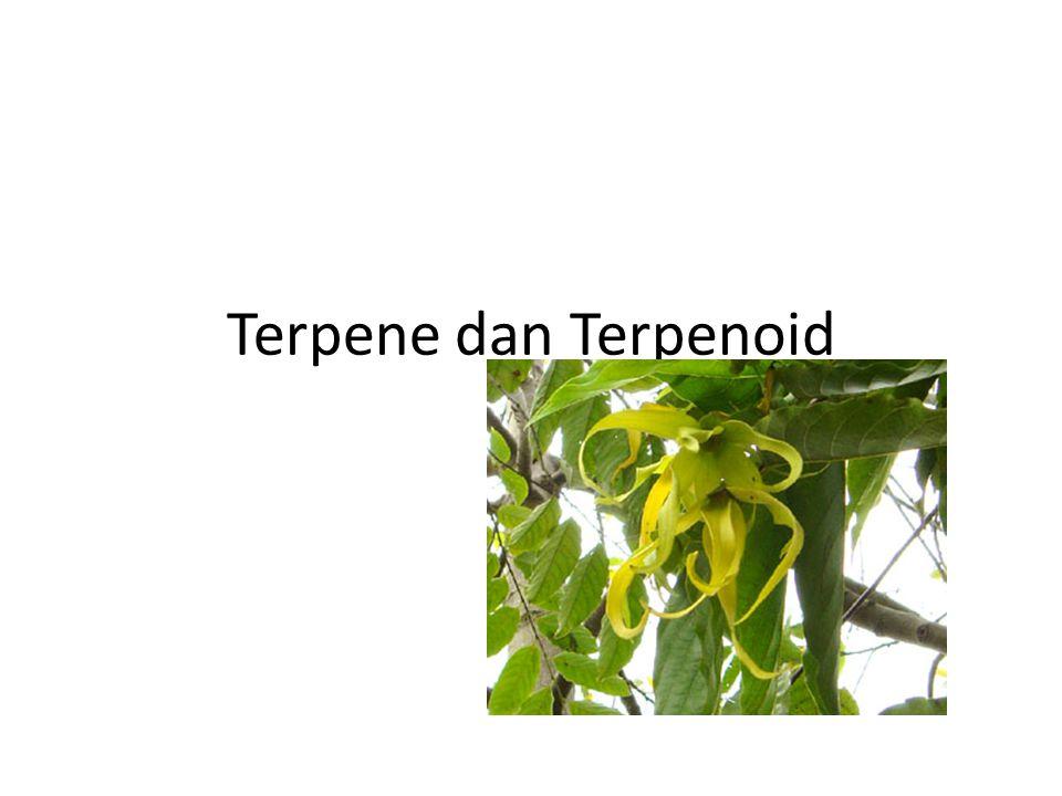 Terpene dan Terpenoid