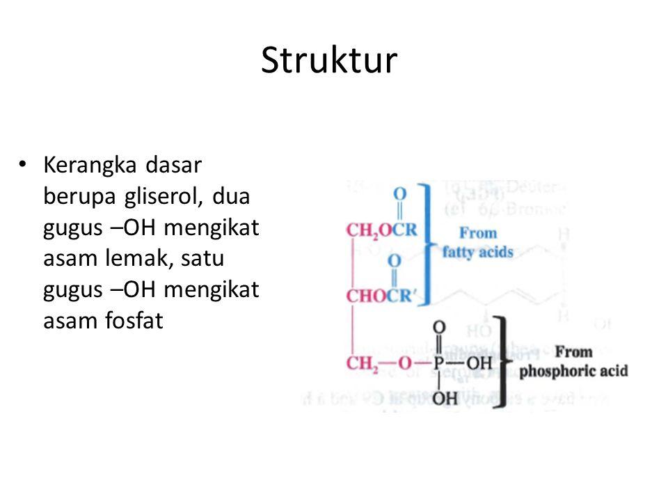 Struktur Kerangka dasar berupa gliserol, dua gugus –OH mengikat asam lemak, satu gugus –OH mengikat asam fosfat.