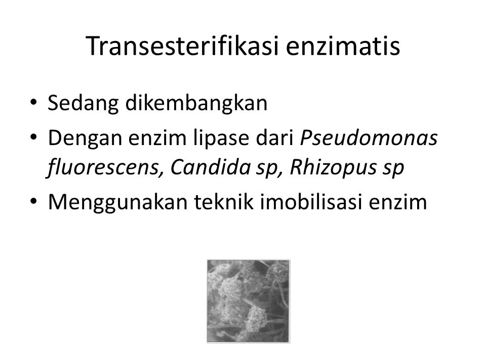 Transesterifikasi enzimatis