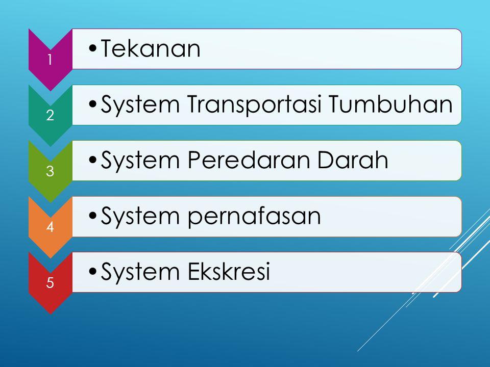 System Transportasi Tumbuhan