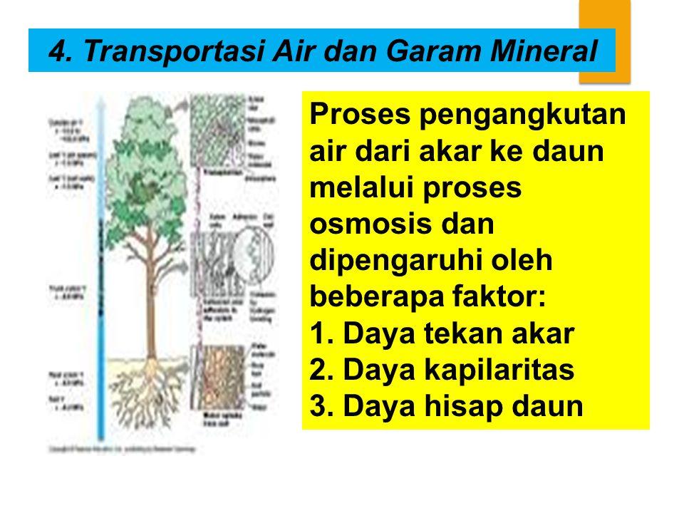 4. Transportasi Air dan Garam Mineral