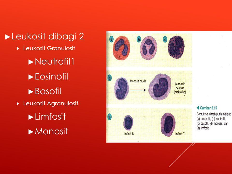 Leukosit dibagi 2 Neutrofil1 Eosinofil Basofil Limfosit Monosit