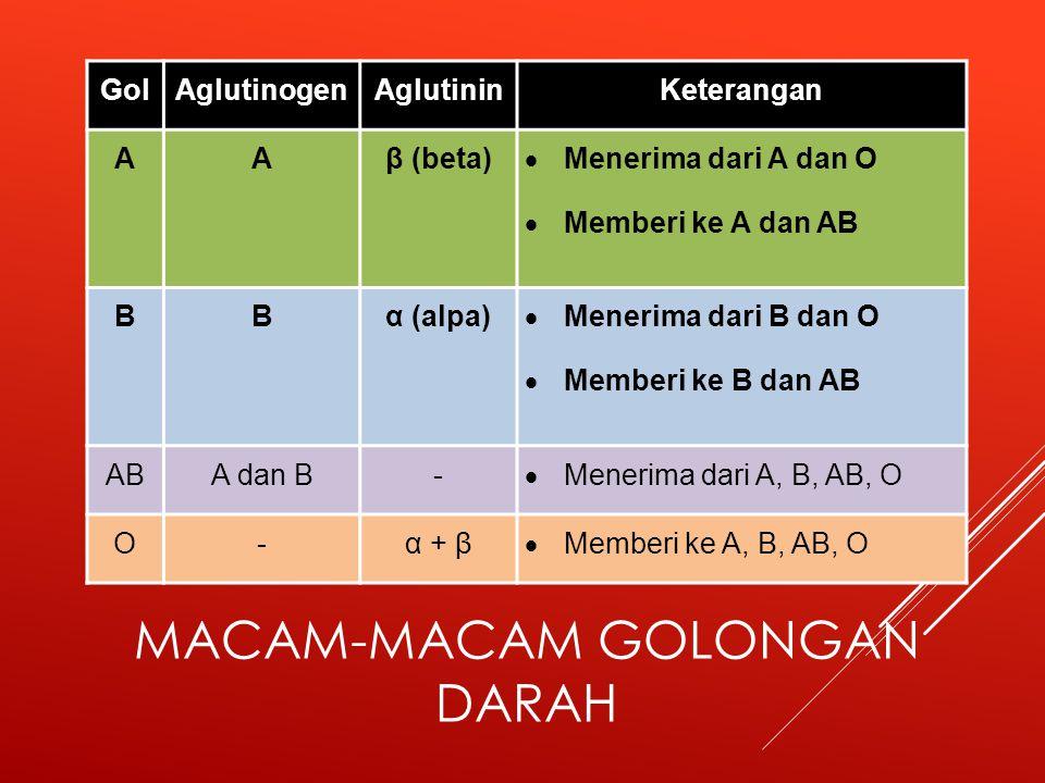 MACAM-MACAM GOLONGAN DARAH