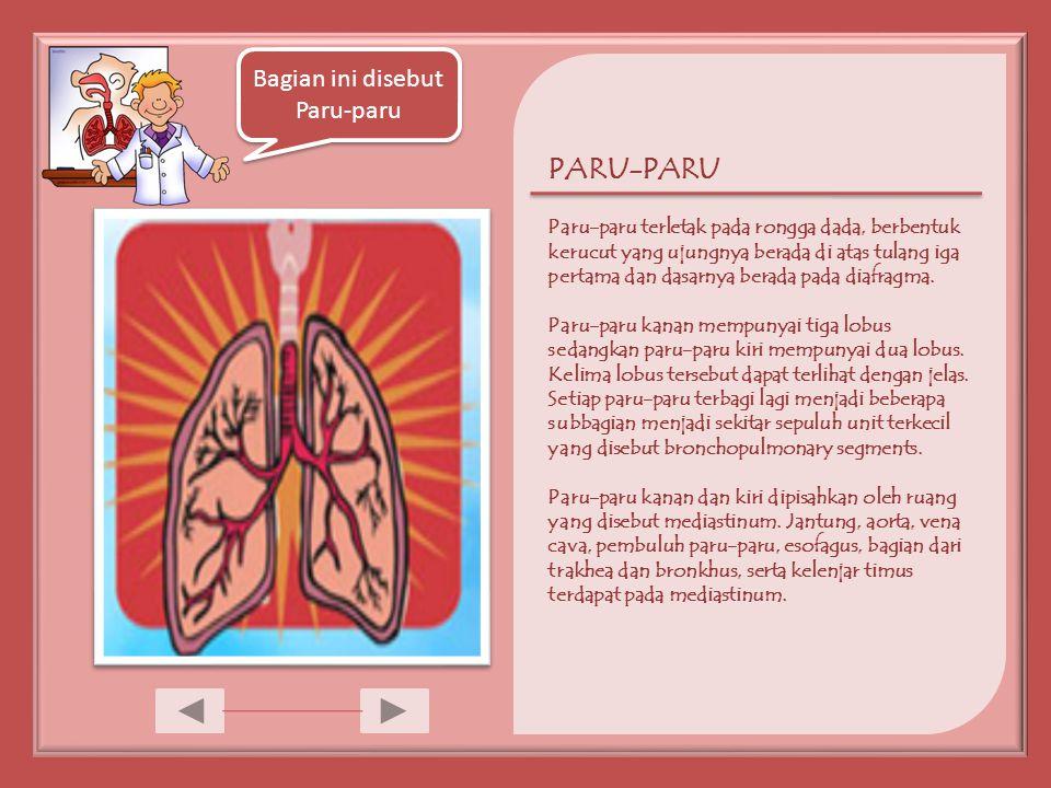 Bagian ini disebut Paru-paru