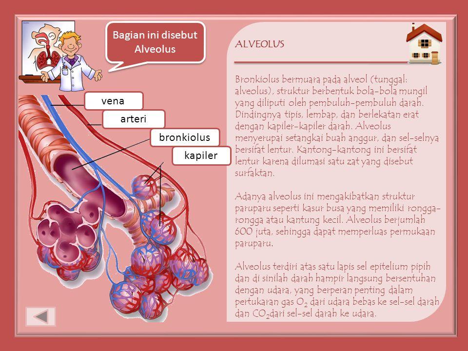 Bagian ini disebut Alveolus