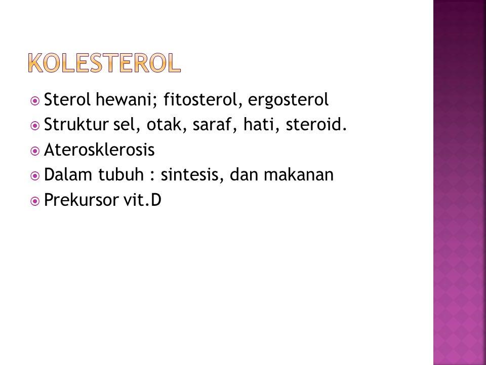 kolesterol Sterol hewani; fitosterol, ergosterol