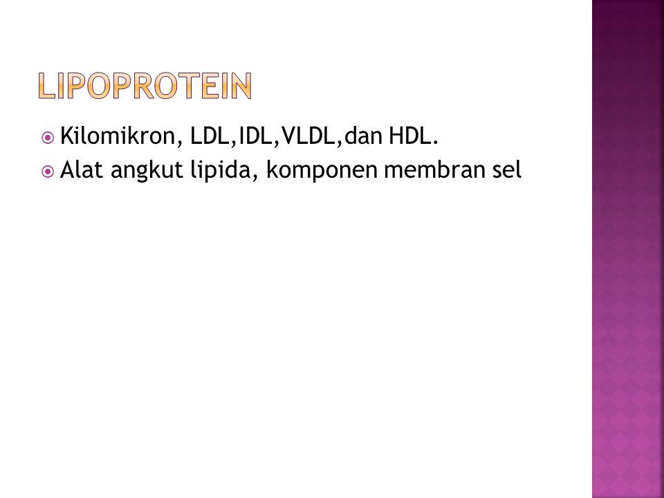 lipoprotein Kilomikron, LDL,IDL,VLDL,dan HDL.