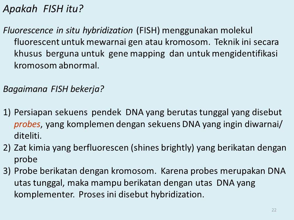 Apakah FISH itu