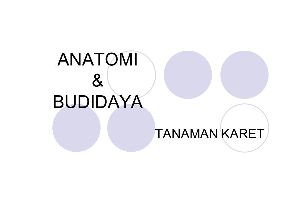 ANATOMI & BUDIDAYA TANAMAN KARET