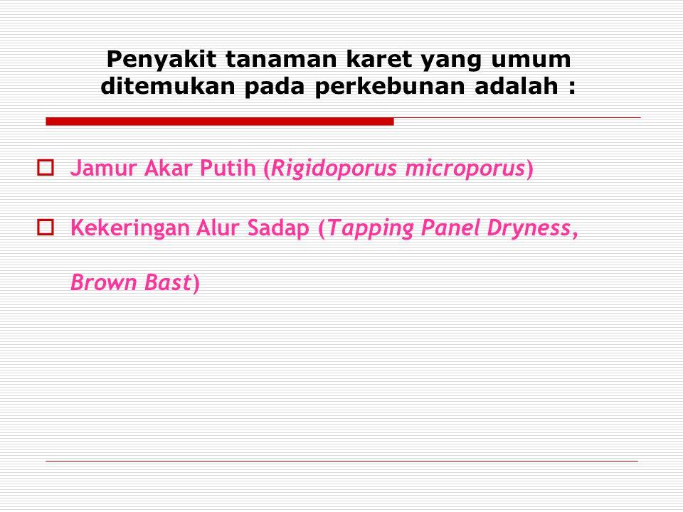 Penyakit tanaman karet yang umum ditemukan pada perkebunan adalah :